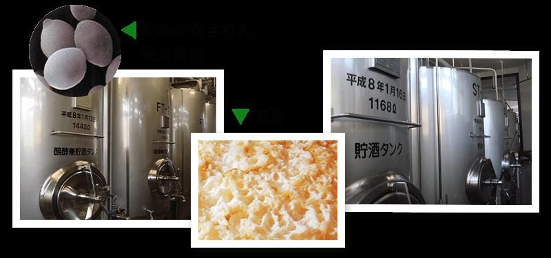 純粋培養された優良酵母 発酵中