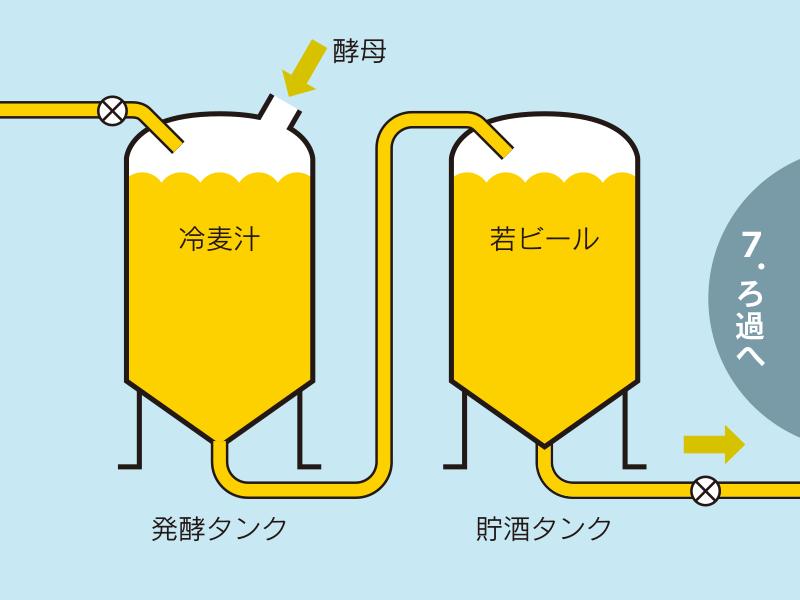 発酵し若ビールをつくる